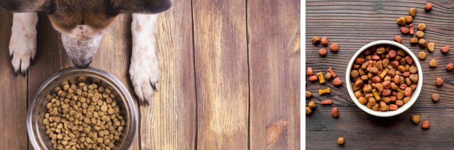 dierenvoeding -hondenvoeding-kattenvoer