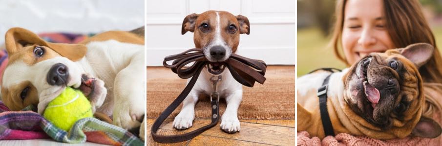 hond kopen - hondenspeeltjes - hondenvoer