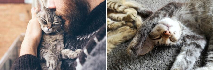 katten - online dierenwinkel - kat kopen - kattenvoer