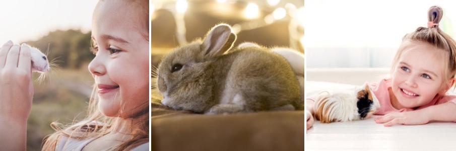 online-dierenwinkel-knaagdier-cavia-knaagdiervoer-konijn
