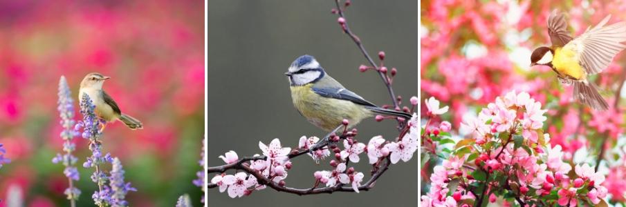 vogels-online-dierenwinkel-parkiet - vogel kopen - vogelvoer - vogelspeeltjes