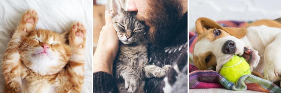 dierenspeciaalzaak- online dierenwinkel - petshop