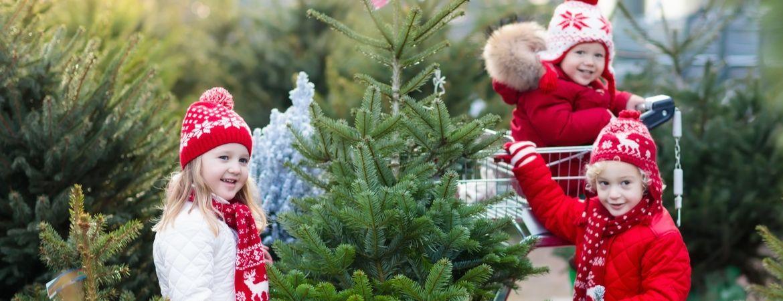 Verzorging Kerstboom.Hoe Een Echte Kerstboom Verzorgen Tuincentrum Eurofleur