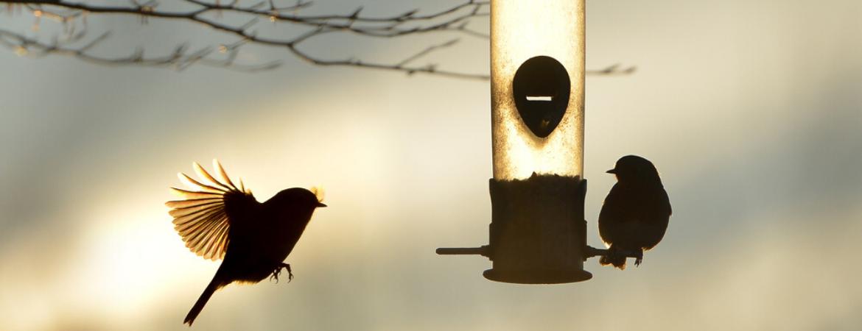 Tuintips wintertuin vogels