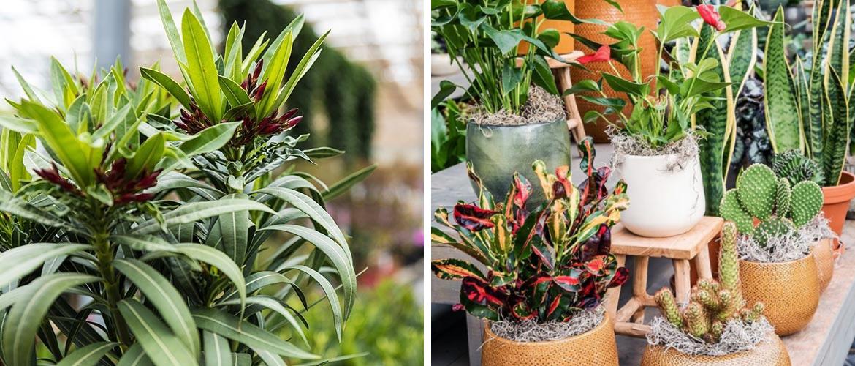 Planten kopen bij Tuincentrum Eurofleur