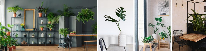Creatief met kamerplanten | Tuincentrum Eurofleur