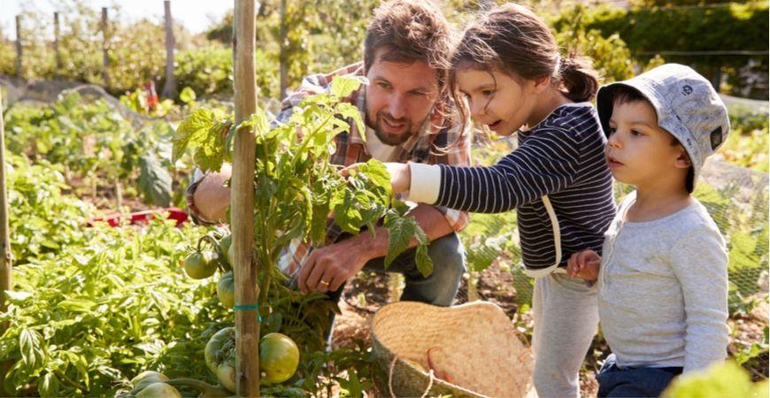 moestuinieren, tomaten kweken, groenten kweken