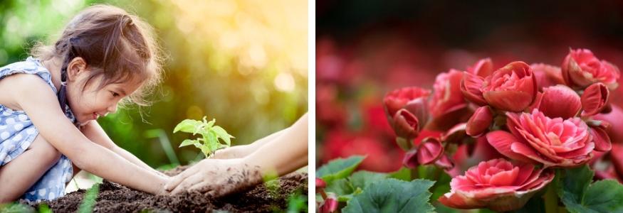 Oosterhout, Waalwijk, Gorinchen, Zaltbommel tuinplant kopen Soest, Woudenberg, Achterveld en Soesterberg