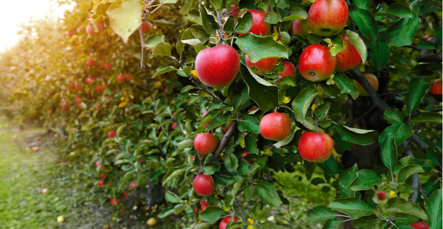 Fruitbomen: het hele jaar door genieten!