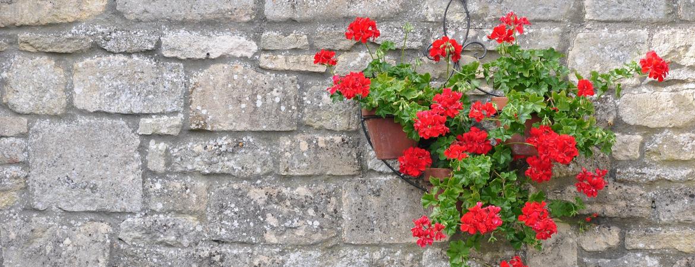 geranium op je muur