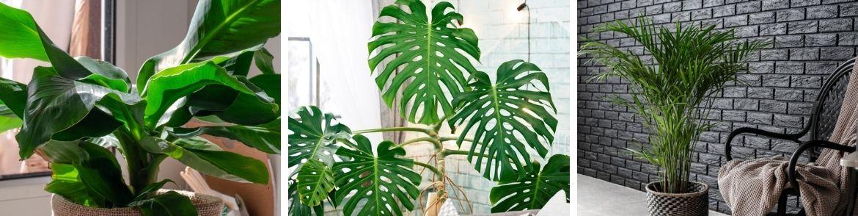grote-kamerplanten-kopen-leusden