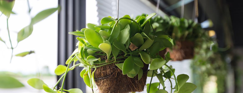 Kamerplanten in je interieur stylen: hoe doe je dat?