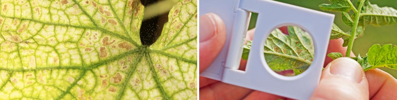 Hoe spint voorkomen of bestrijden bij kamerplanten?   Tuincentrum Eurofleur