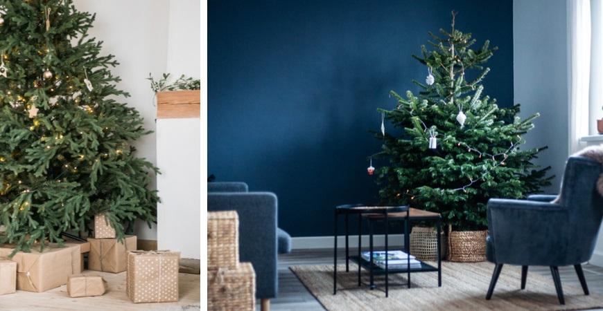 Kerstboom kopen | Tuincentrum Eurofleur
